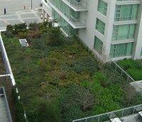 zielone pokrycie dachu